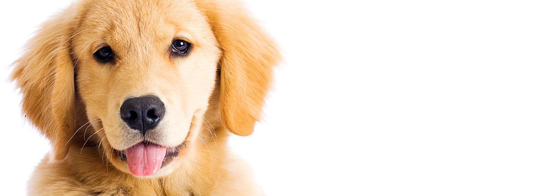 frontpage-background-image-dogwalkingco-isleofwight